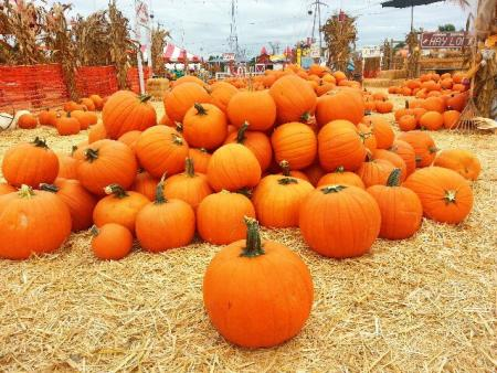 The Johnson Brothers Pumpkin Patch has so many pumpkins to choose from!