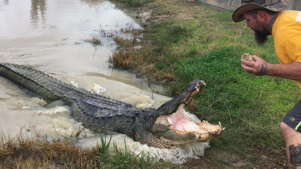 Big Texas at Gator Country