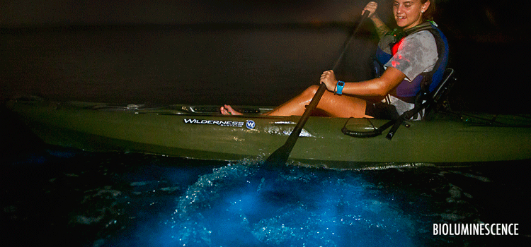 Bioluminescence Kayaking Tours