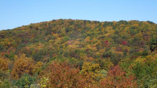 Gum Spring Blue Ridge Parkway - Fall Photo