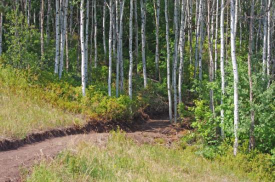 Jenny's Trail