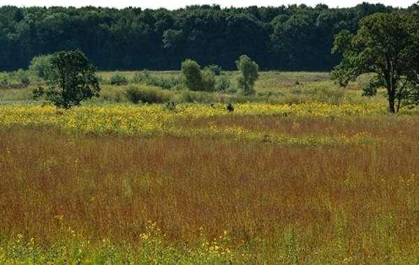 UW-Madison Arboretum Native Plant Garden Tour: Fall in the Native Plant Garden.