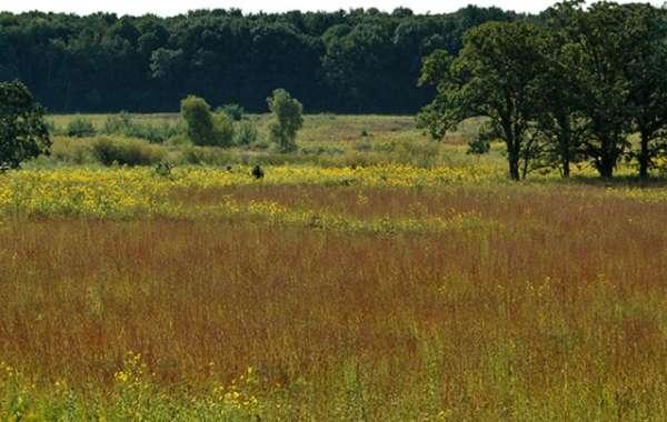 UW-Madison Arboretum Walk: Walking in Leopold's Footsteps.