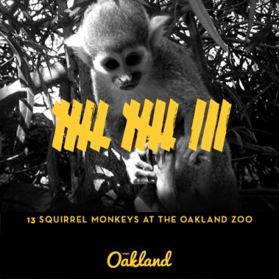 Squirrel Monkeys at the Oakland Zoo