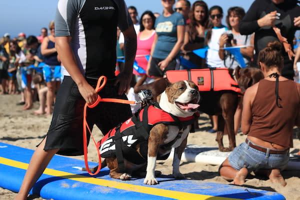 A Surf City Surf Dog