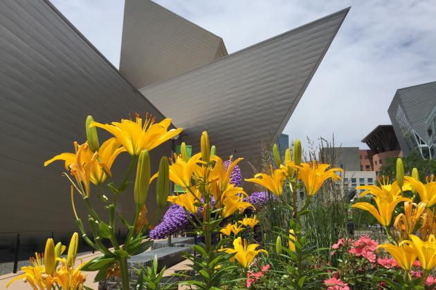 denver-art-museum-flower-garden