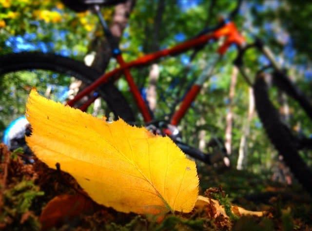 Carvins Cove Leaf - Fall Photo
