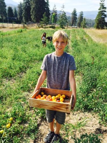 Hunter of Sunshine Farms