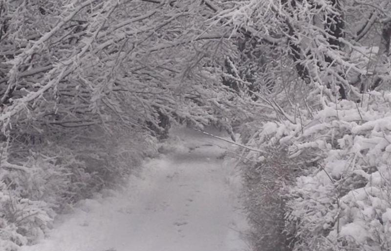 vicky-money-lane-snow-winter-scenic