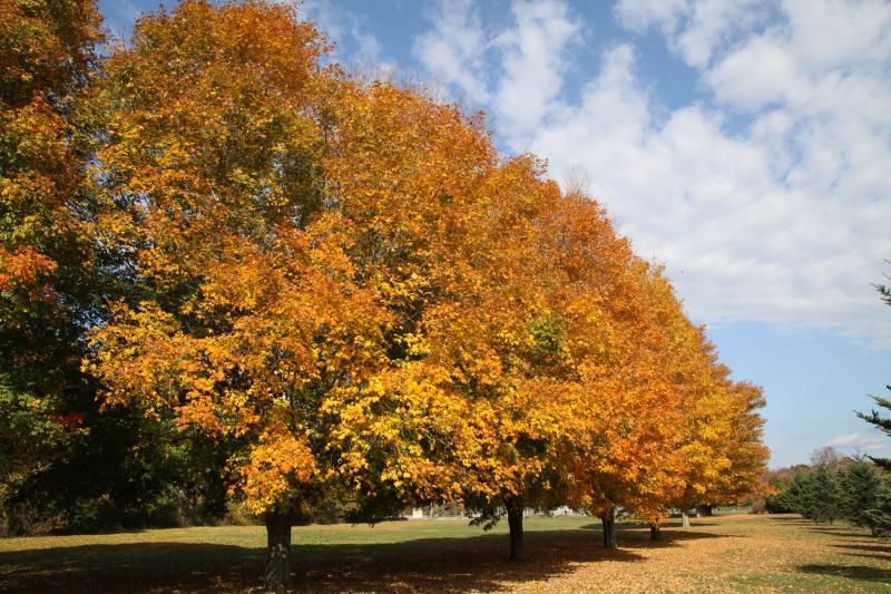 7292-fall-foliage-colt-state-park-crjenniferbalch