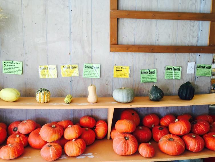 My Country Garden Gourd, Squash, & Pumpkins