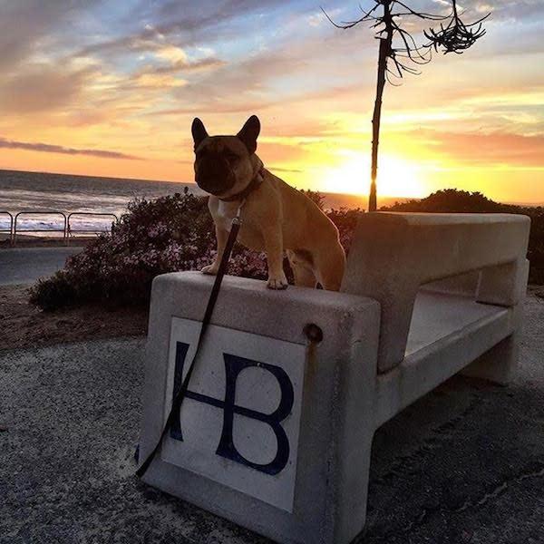 Huntington Dog Beach photo by @ocfrenchie