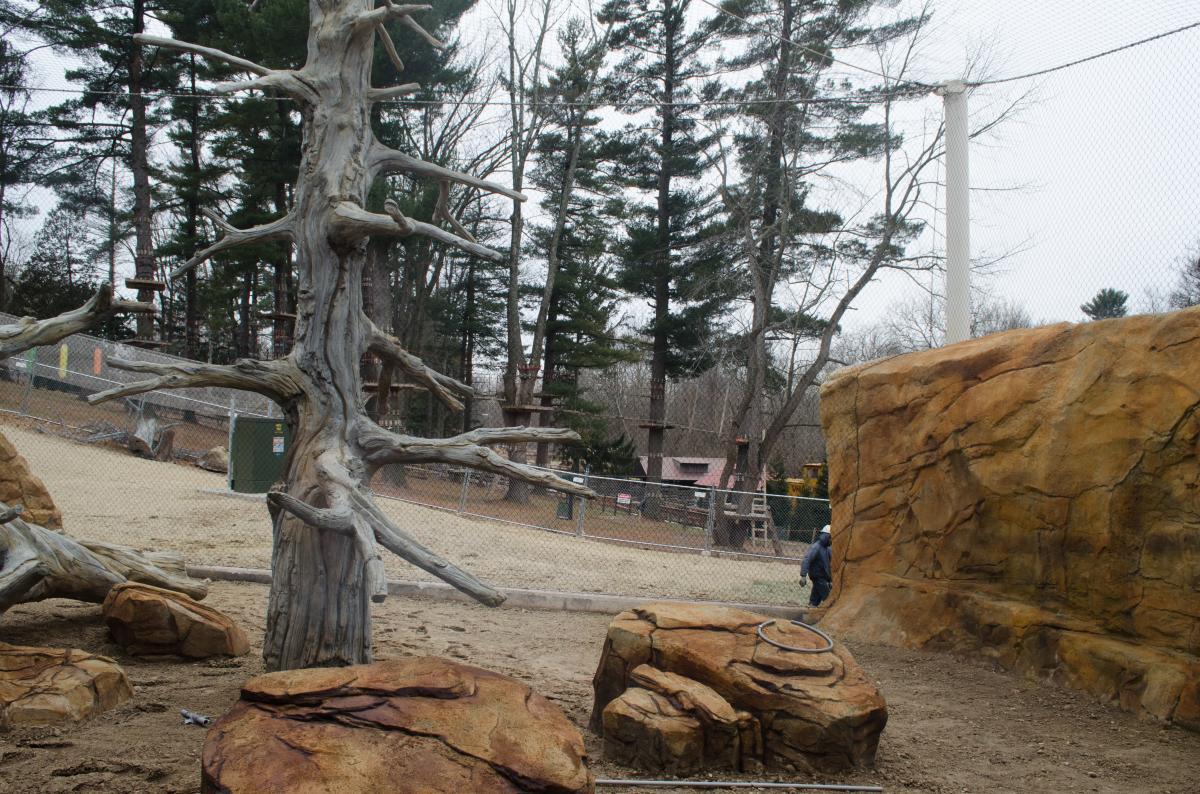 The Elmwood Park Zoo jaguar exhibit shares a connection to Disney's Animal Kingdom
