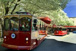 Red Trolleys in Spring