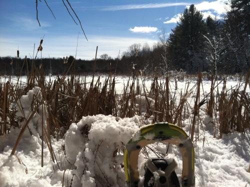 Snowshoeing in Grand Rapids