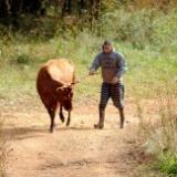 Bull Farms