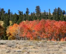 Dunderberg Meadows Road Fall Colors