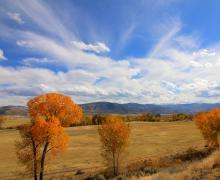 Fall Colors in Walker