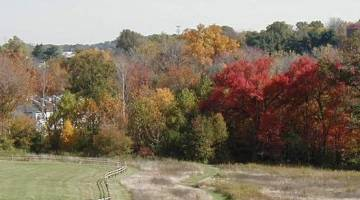 Fall Foliage - Norristown Farm Park - Side Panel