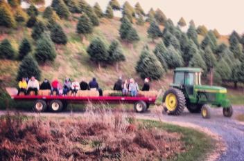 McCurdy's Tree Farm