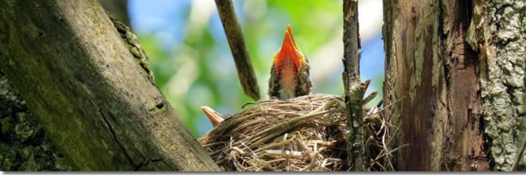 Ecosystem Preserve Bird