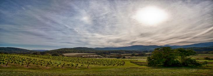 The sun over a vineyard with mountains in the background