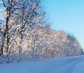 Instagram Contest - Winter