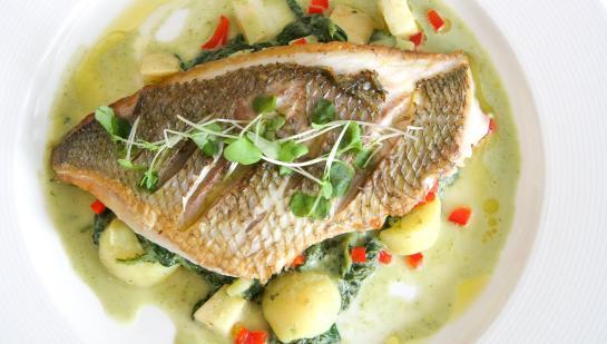 Jamestown FISH