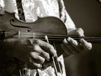 Fiddle - Duotone