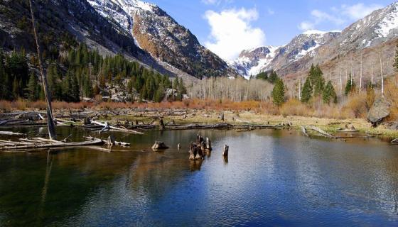 Lundy Canyon Beaver Ponds