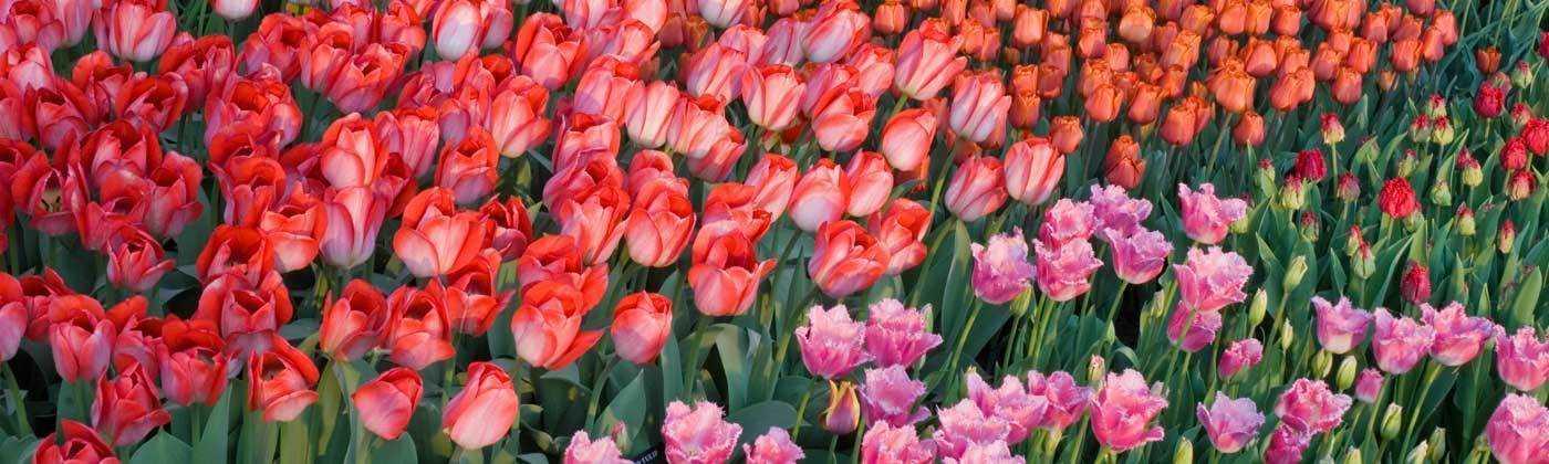 Longwood Flowers