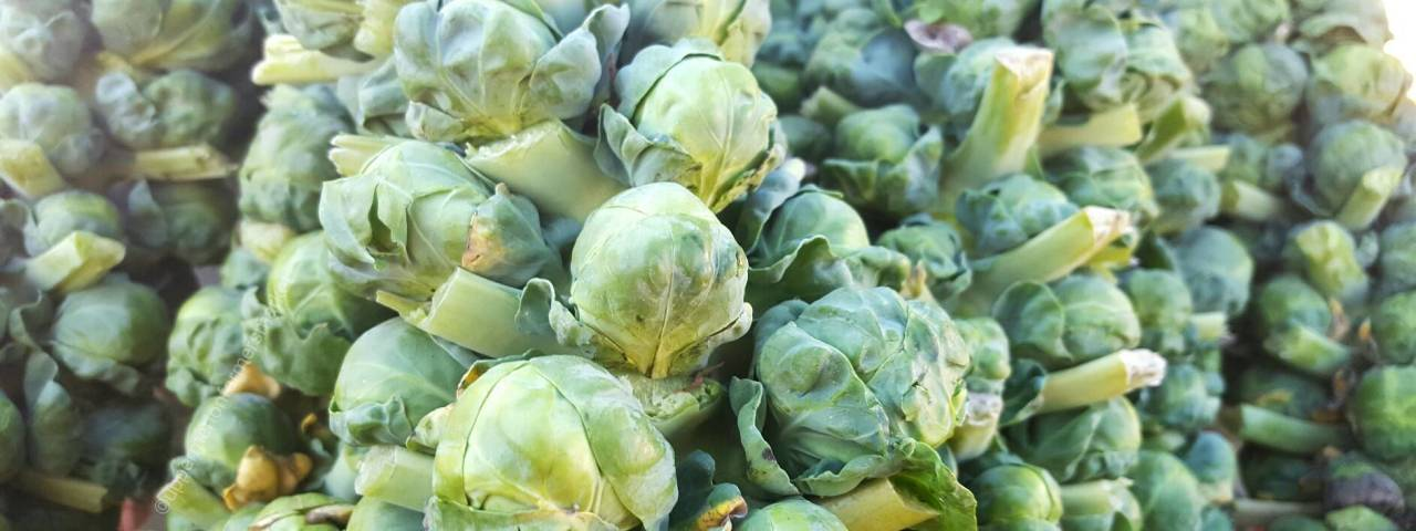 Upper Merion Farmers Market Brussels Sprouts