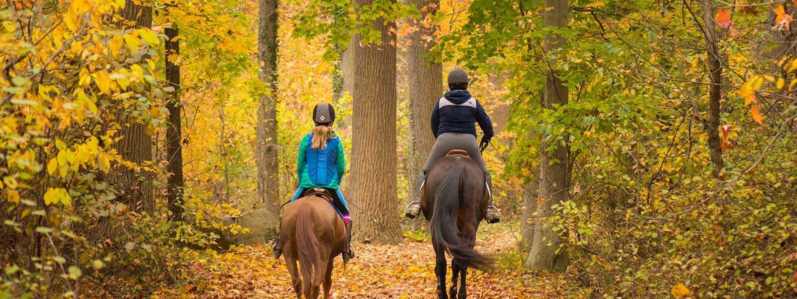 Horseback Riding at Bellevue State Park, Wilmington, Delaware