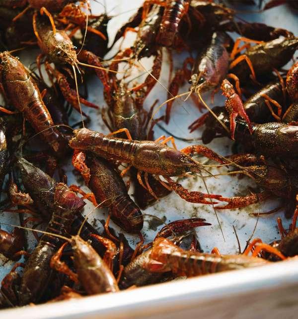 Crawfish Pile