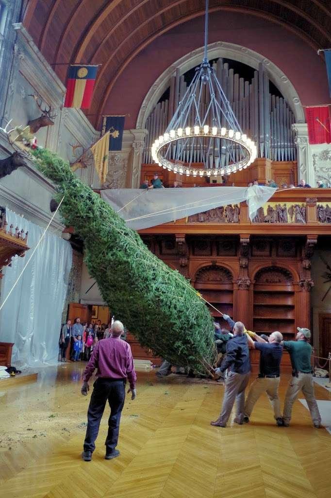 Biltmore Welcomes 35-Foot Christmas Tree