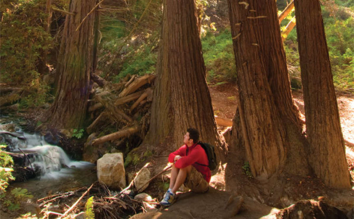 Redwoods at Julia Pfeiffer Burns State Park