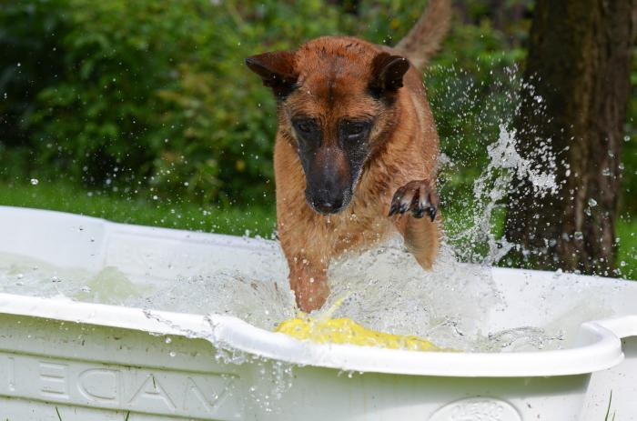 Dogs will appreciate a dip in the pool when temperatures rise. Picture: Pixabay