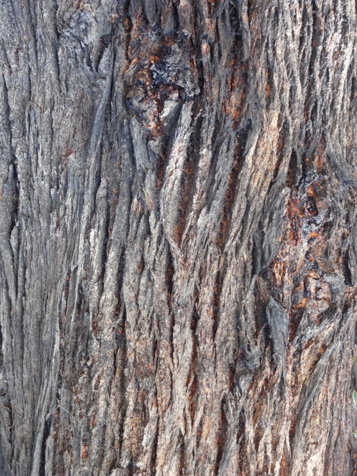 What Is Tree Bark Pursuit By The University Of Melbourne