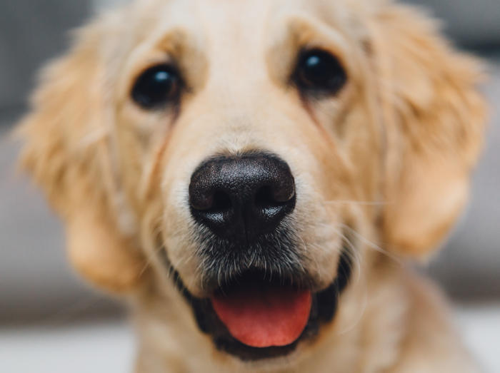 There are plenty of myths over why dogs have wet noses. Picture: Pexels