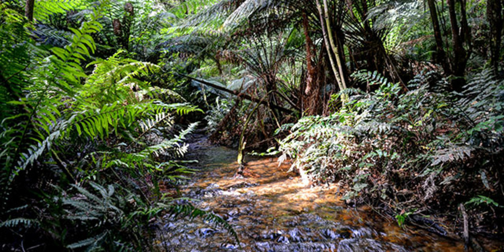 Creswick Seminar - Research and Monitoring in Victoria's State forests