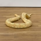 Stephen Lichty, Snake, 2016, taxidermy snake and bronze, 36 x 58 x 7 1/2 in. (91.44 x 147.32 x 19.05 cm)