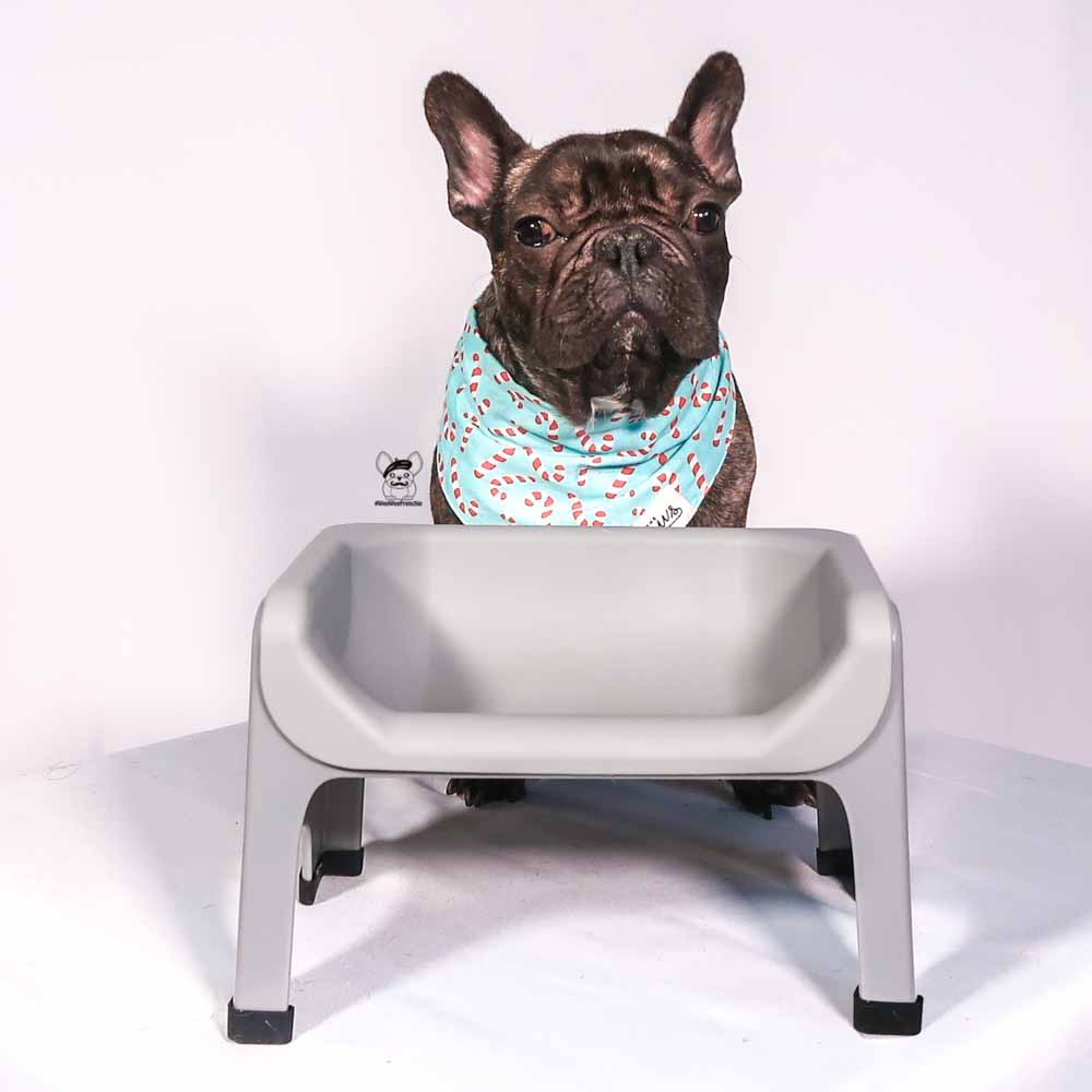 Are You Looking For An Elevated Feeder For Your Dog