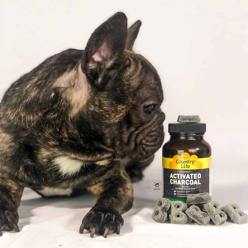 Using Activated Charcoal In Your Dog