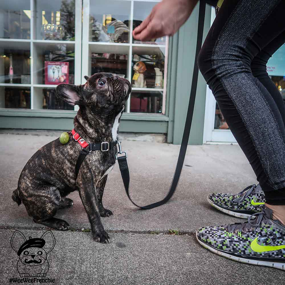 Confessions of the Frazzled Frenchie Mom - Part 2