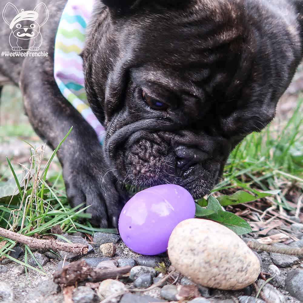Creating an Easter Egg Hunt for Your Dog
