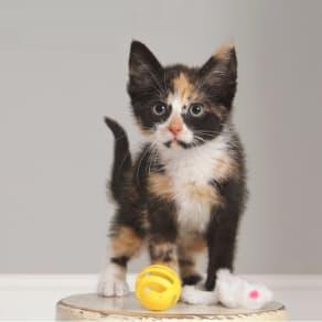 Pet Photography Event